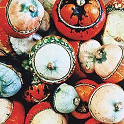 Aladin Gourd