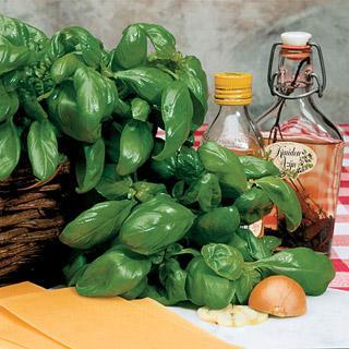 Basil Large Leaf Italian