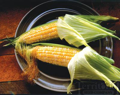 Quickie Corn