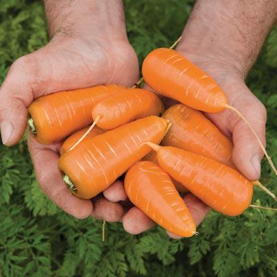 Caracas Carrots