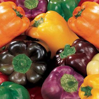 Pepper Sweet Rainbow Mix