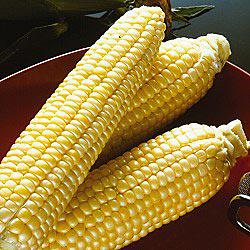 Sugar Buns (se) Sweet Corn
