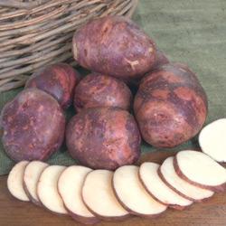Potato Purple Viking