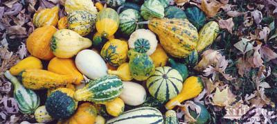 Ornamental Gourds Mix-Small