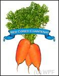 Organic Red Cored Chantenay Carrot Seed