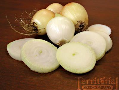 Copra Onion