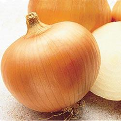 Yellow Sweet Spanish Hybrid Onion