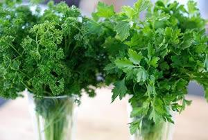 Parsley, Broad Leafed (Plain), organic