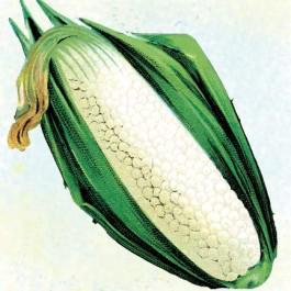 Country Gentleman Sweet Corn