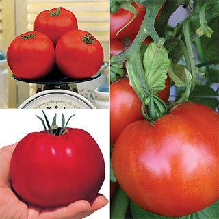 Park's Exclusive Tomato Collection