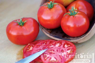 Burbank Slicing Tomato Conventional & Organic
