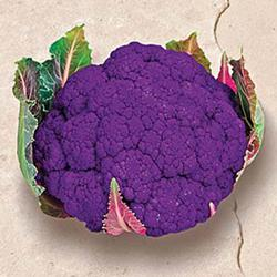 Graffiti Hybrid Cauliflower