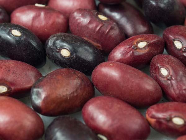 Akha Purple Mountain Bean