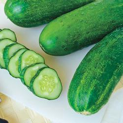 Sassy Hybrid Cucumber