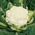 Cauliflower, All The Year Round, Warm weather