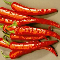 Chili Pepper Thai Dragon F1 Hybrid (Almost Atomic)