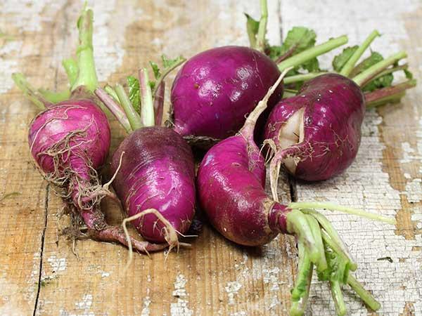 Purple Plum Radish