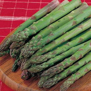 Asparagus Jersey Knight Hybrid