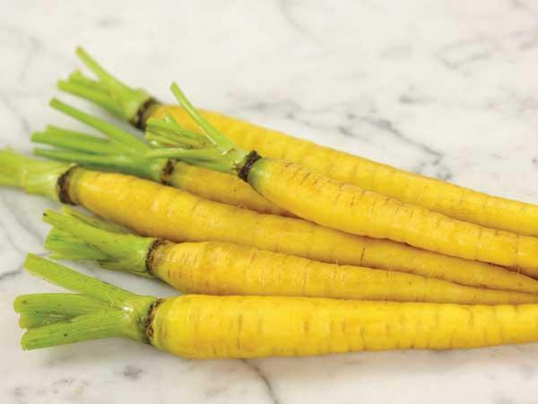 Jaune Obtuse du Doubs Carrot
