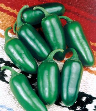 Organic Pepper Early Jalapeno