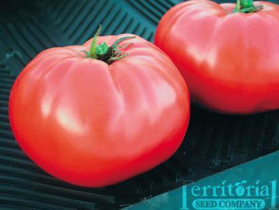 Brandywine Tomato Conventional & Organic