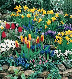 SOLD OUT Naturalizing Collection - 210 bulbs