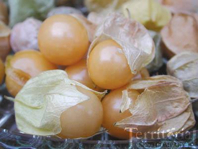 Pineapple Ground Cherry Organic