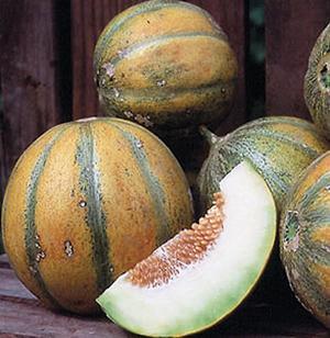 Melon, Haogen