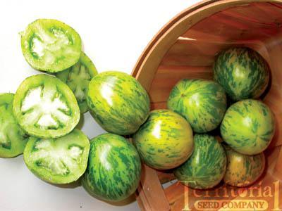Green Zebra Tomato Organic