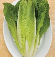 Ridgeline (OG) (Pelleted) Romaine Lettuce