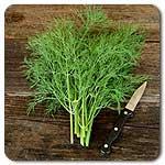 Organic Bouquet Dill