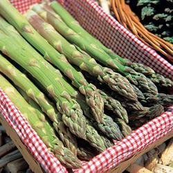 Asparagus Jersey Supreme Hybrid