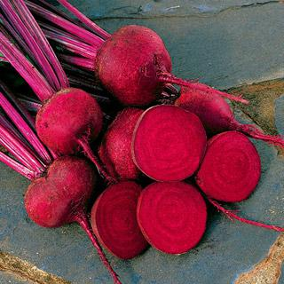 Beet Red Ace Hybrid