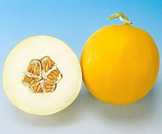 Melon Amy Hybrid