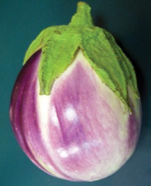 Eggplant, Rosa Bianca, Organic