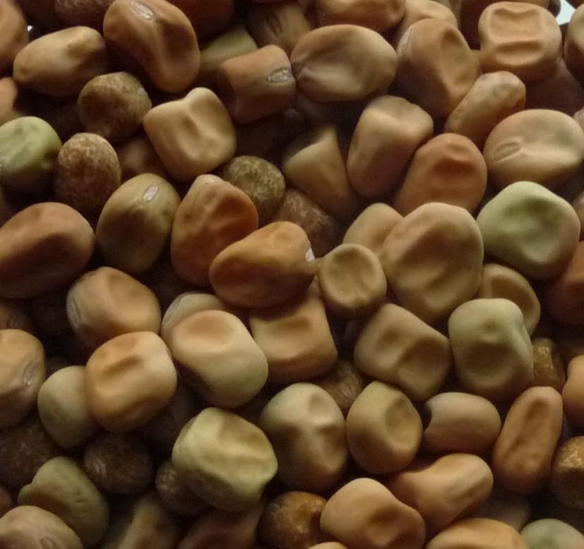 Capucinea (Dry Soup Pea)
