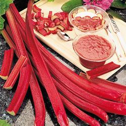 Rhubarb Chipman's Canada Red