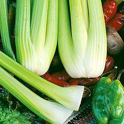 Celery Victoria F1 Hybrid