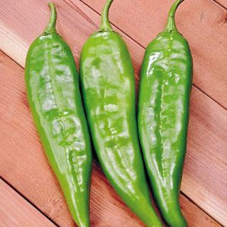 Pepper Sahuaro Hybrid