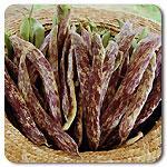 Organic Dragon Langerie Bush Bean