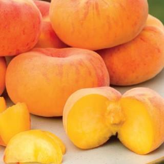 Flat Wonderful™ Semi-Dwarf Peach
