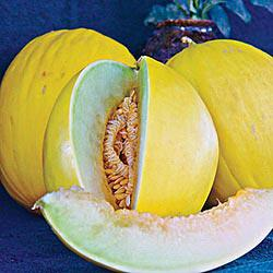 Tweety Hybrid Melon