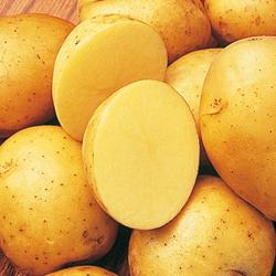 Potato Yukon Gold