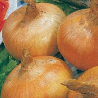 Onion Yellow Granex Hybrid 33