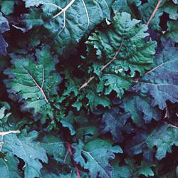 Red Russian Kale Greens