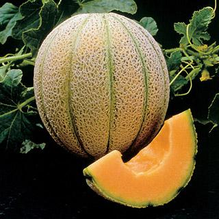 Melon Magnifisweet Hybrid