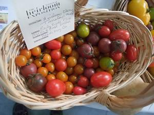Tomato, Cherry Mix
