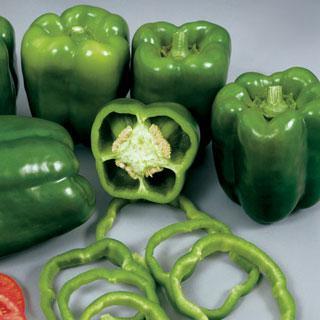 Pepper Colossal Hybrid