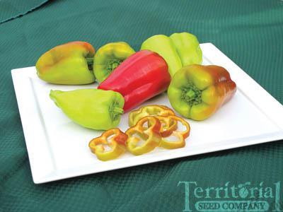 Healthy Pepper Organic