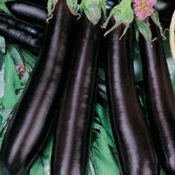 Melanzana – Eggplant Viserba